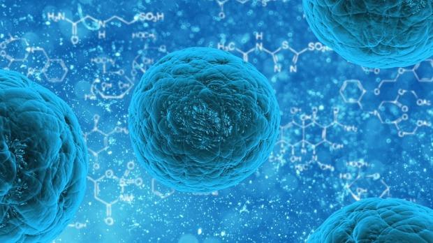 stem-cell-163711_960_720.jpg
